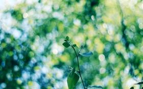 Обои деревья, ветка, лист, размытость