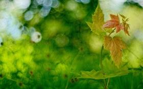 Обои листья, фон, зелень, размытость