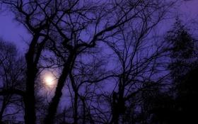 Обои свет, ночь, туман, дерево, силуэт, дымка