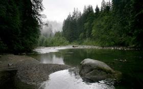 Обои лес, камни, речка