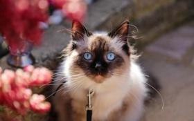 Картинка кошка, лето, кот, усы, взгляд, морда, котэ