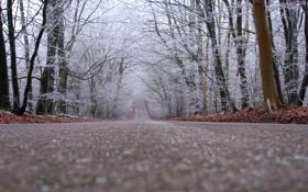 Картинка снежок, пасмурно, поздняя осень, вдаль, деревья, дорога, опавшие листья