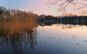 Обои закат, ветки, озеро, камыш