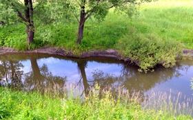 Картинка трава, деревья, река