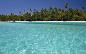 Обои море, лето, вода, пальмы, остров, красивые обои