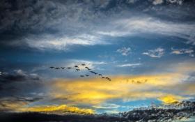 Обои природа, небо, птицы