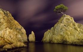 Картинка звезды, ночь, дерево, скалы