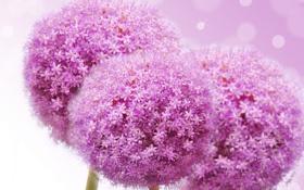 Обои цветы, сиреневые цветочки, flowers lilac flowers
