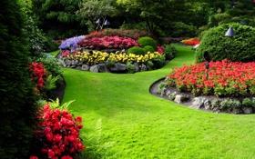 Обои зелень, трава, деревья, цветы, газон, сад, разноцветные