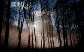 Обои лес, лучи, деревья, природа, туман
