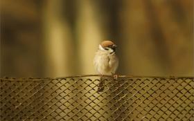 Картинка птица, забор, решетка, арт, воробей
