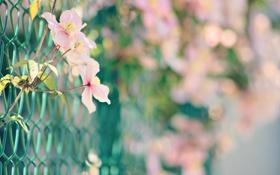 Картинка сетка, забор, макро, цветы