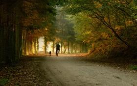 Обои дорога, парни, прогулка, велосипеды, лес, собаки, настроение