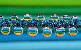 Обои вода, капли, роса, цвет, ряд