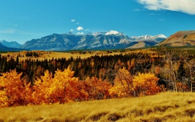 Обои осень, Канада, Banff National Park, деревья, трава, горы, Альберта