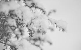 Картинка лед, зима, снег, иголки, ветви, елка, Природа