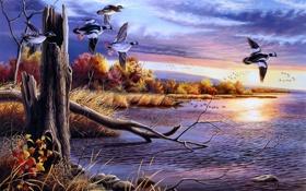 Обои осень, вода, птицы, озеро, рисунок, утки, живопись
