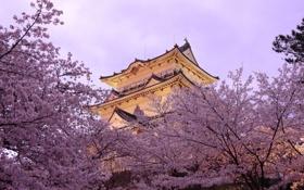 Картинка деревья, весна, Япония, пагода, цветение