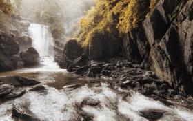 Обои лес, природа, река, камни, водопад