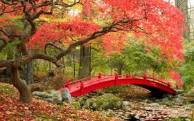 Обои листья, осень, деревья, природа, фото, сад, мост