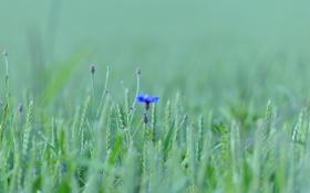 Обои цветок, поле, луг, трава