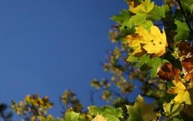 Обои растения, природа, листья, макро