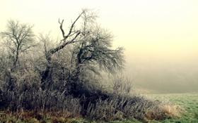 Обои иней, деревья, туман, утро, кусты