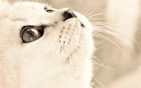 Картинка глаза, кот, взгляд, морда, Кошка, art