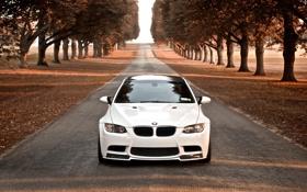 Картинка дорога, осень, деревья, BMW, белая