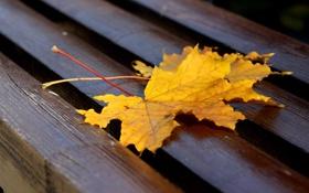 Обои листья, лавочка, осень