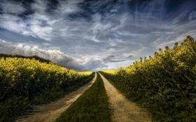 Обои поле, небо, трава, облака, цветы, путь, поле цветов