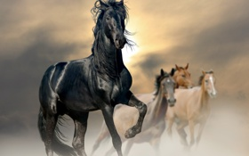 Обои солнце, конь, лошадь, пыль
