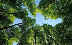 Картинка небо, листья, деревья, природа, фотографии, леса