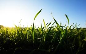 Обои лето, небо, трава, солнце, свет, природа, утро