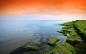 Картинка море, небо, камни, мох, оранж