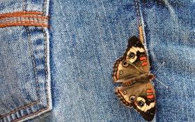 Обои макро, бабочка, джинсы