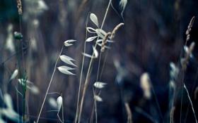 Картинка поле, трава, макро, колоски, сухая