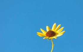 Обои цветок, небо, лепестки, стебель
