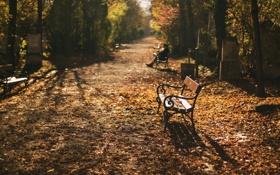 Обои осень, город, кладбище