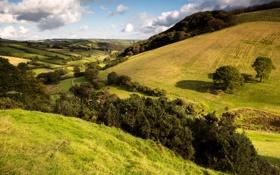 Обои трава, деревья, холмы, поля, простор, луга