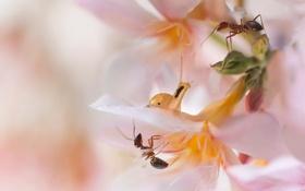 Картинка розовый, улитка, муравьи, цветок