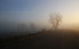 Картинка дорога, деревья, природа, путь, дерево, пейзажи, туманы