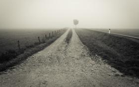 Обои дорога, трава, пустота, туман, дерево, забор