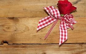 Обои доски, роза, лента, rose, бантик, bow, ribbon