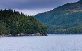 Обои США, лес, река, фото, природа, Alaska, горы