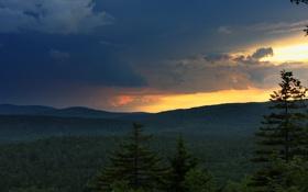 Обои пейзаж, wallpaper, небо, лес, обои, панорама, деревья