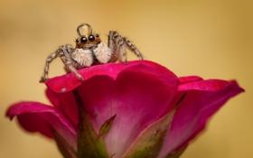Обои цветок, макро, капля, паук