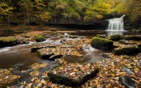 Картинка осень, лес, листья, деревья, река, камни, Англия