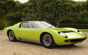 Обои фары, Lamborghini, 1969, зелёный, суперкар, кусты, передок