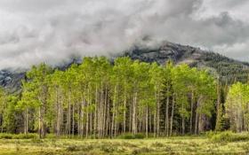 Картинка осень, трава, деревья, горы, небо, тучи